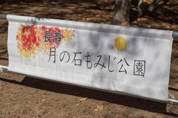 2014_11_22_IMG_8748