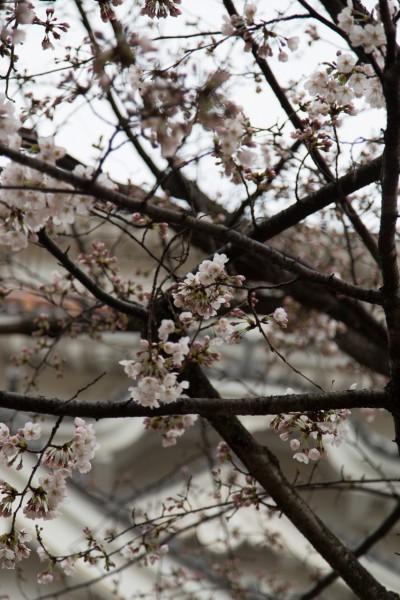 2015_03_29_IMG_9999_22