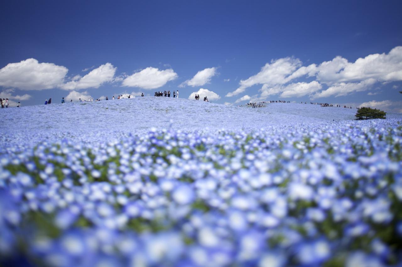 花撮り好きなあなたへ5月の関東おすすめ撮影スポット ふぉとぷろむ