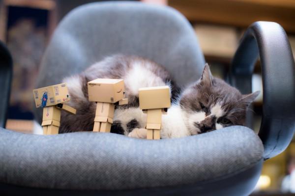 ネコとダンボー