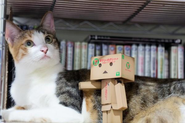 ネコとダンボー2