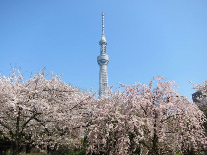 skytree-cherry
